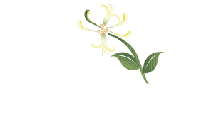 The Haven Dental Practice